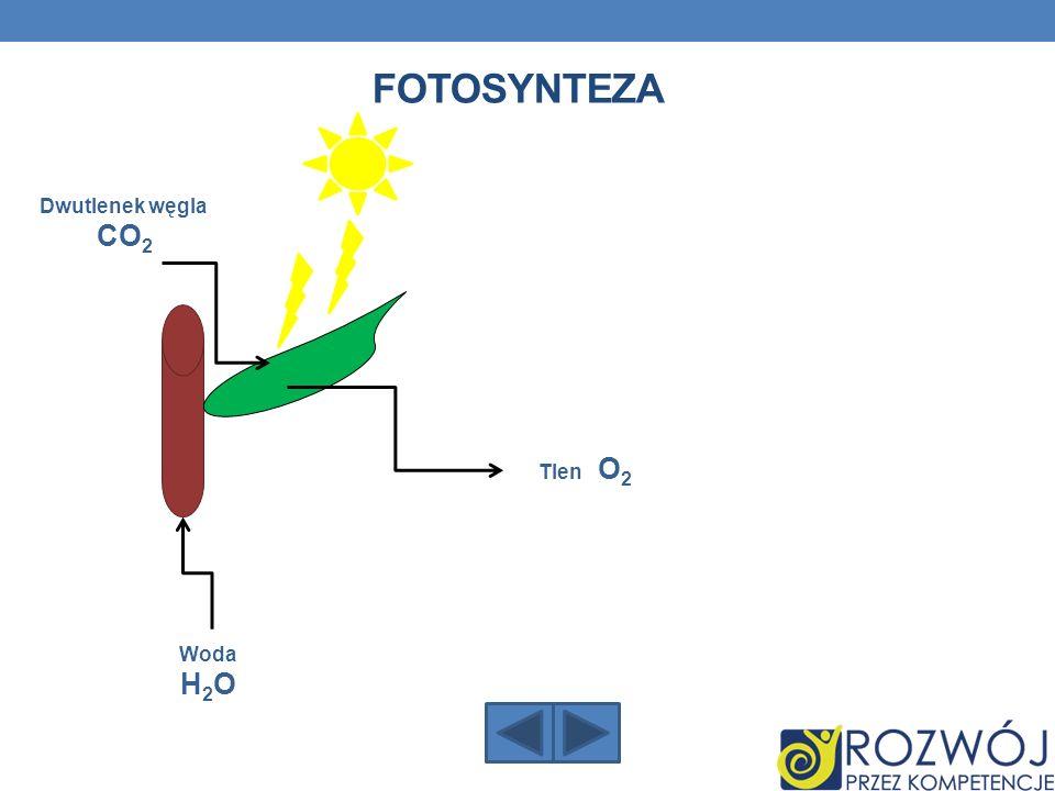 fotosynteza Dwutlenek węgla CO2 Tlen O2 Woda H2O