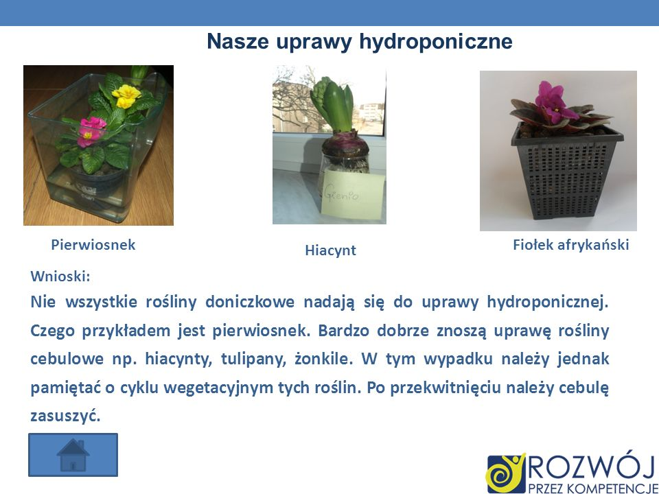 Nasze uprawy hydroponiczne