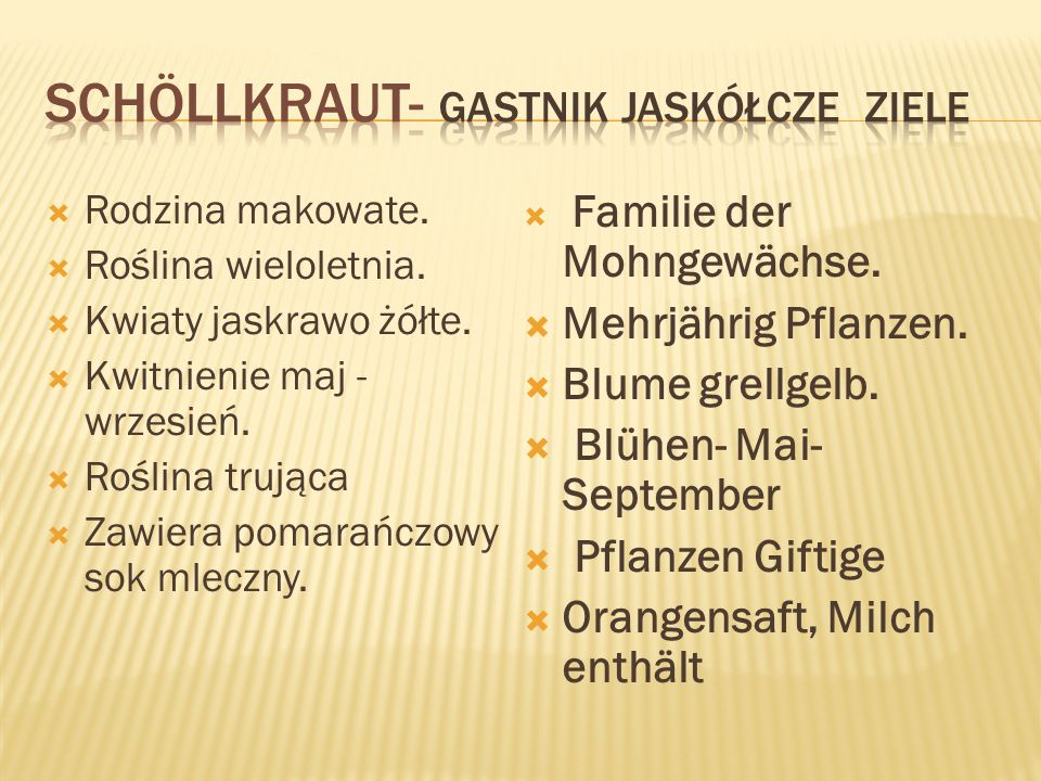 Schöllkraut- gastnik jaskółcze ziele