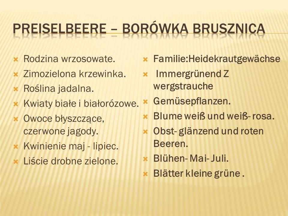 Preiselbeere – borówka brusznica