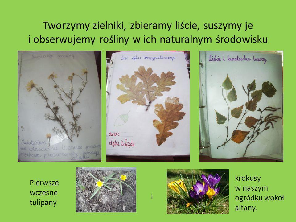 Tworzymy zielniki, zbieramy liście, suszymy je i obserwujemy rośliny w ich naturalnym środowisku