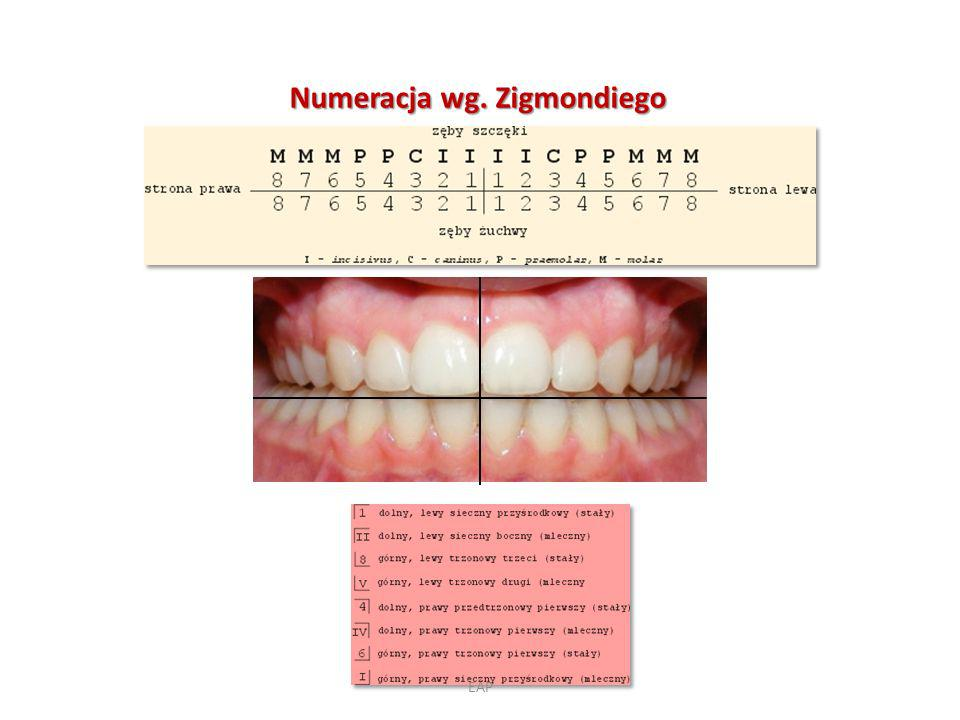 Numeracja wg. Zigmondiego
