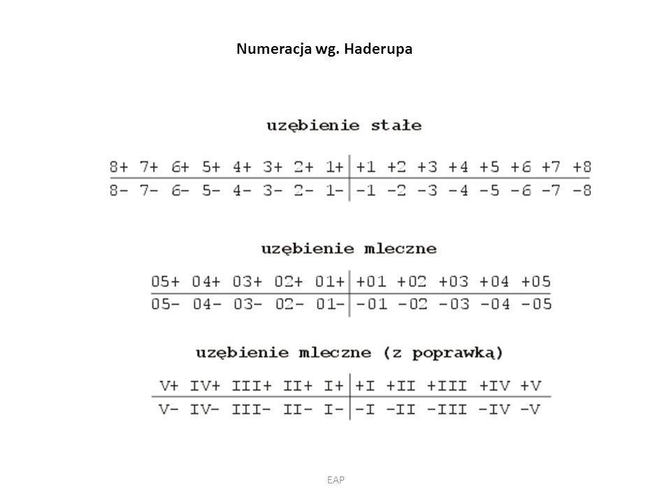 Numeracja wg. Haderupa EAP