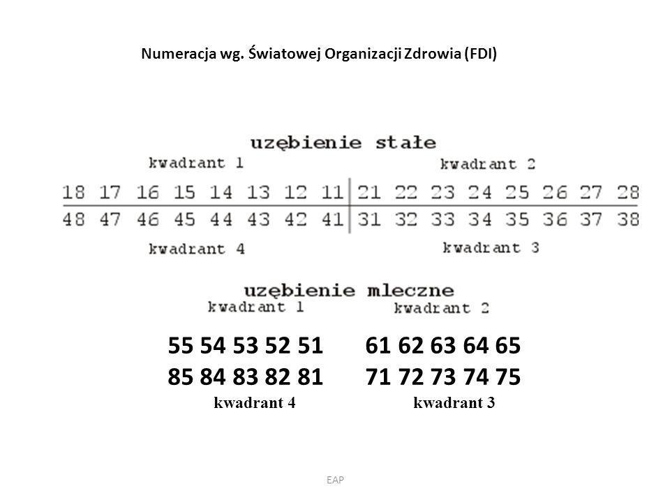 Numeracja wg. Światowej Organizacji Zdrowia (FDI)