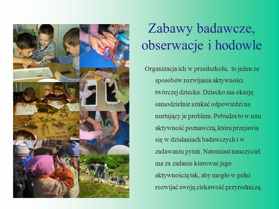 Zabawy badawcze, obserwacje i hodowle