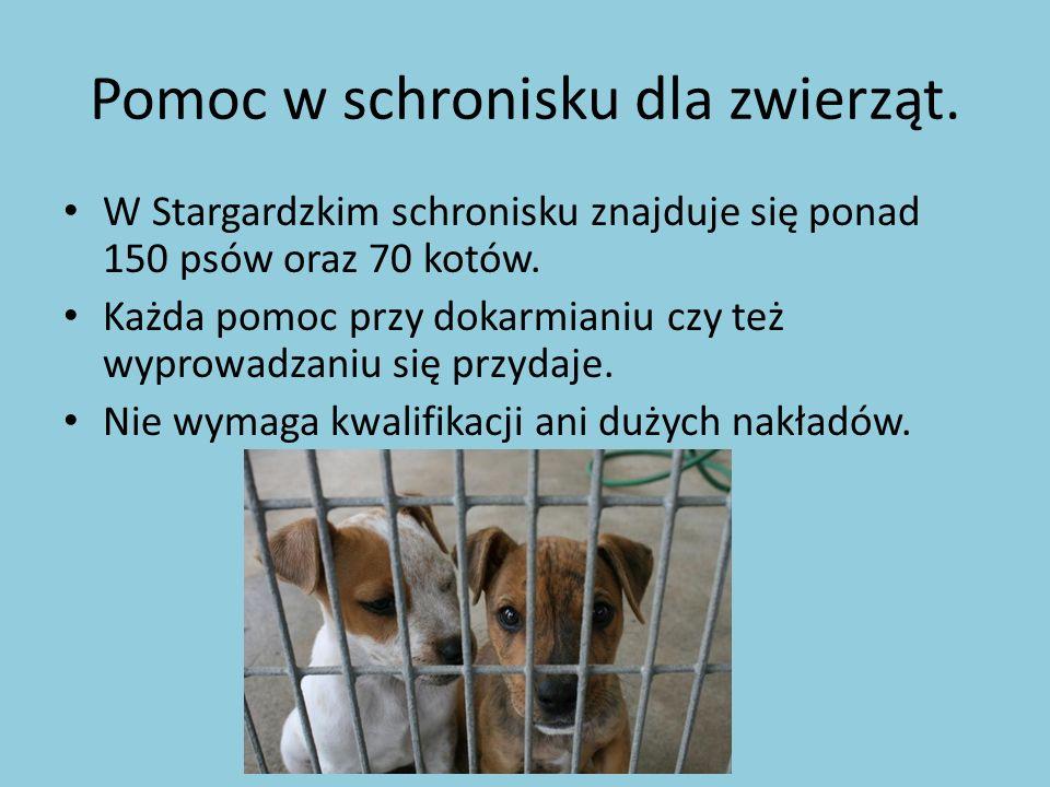 Pomoc w schronisku dla zwierząt.