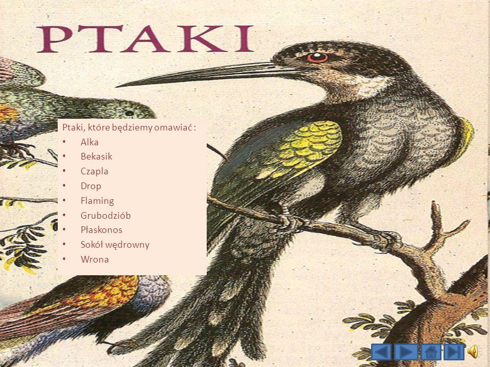 Ptaki, które będziemy omawiać :