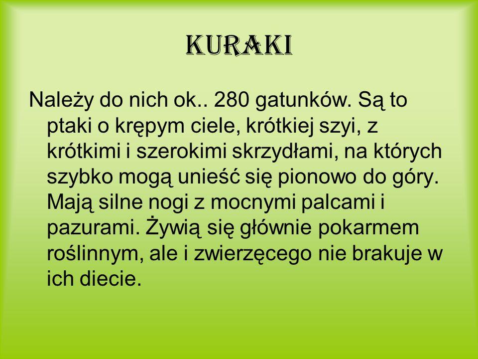 Kuraki