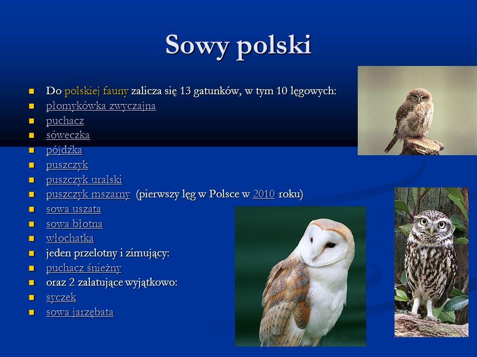 Sowy polski Do polskiej fauny zalicza się 13 gatunków, w tym 10 lęgowych: płomykówka zwyczajna. puchacz.