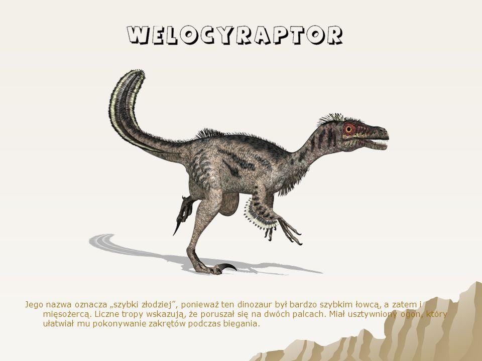 """Jego nazwa oznacza """"szybki złodziej , ponieważ ten dinozaur był bardzo szybkim łowcą, a zatem i mięsożercą."""