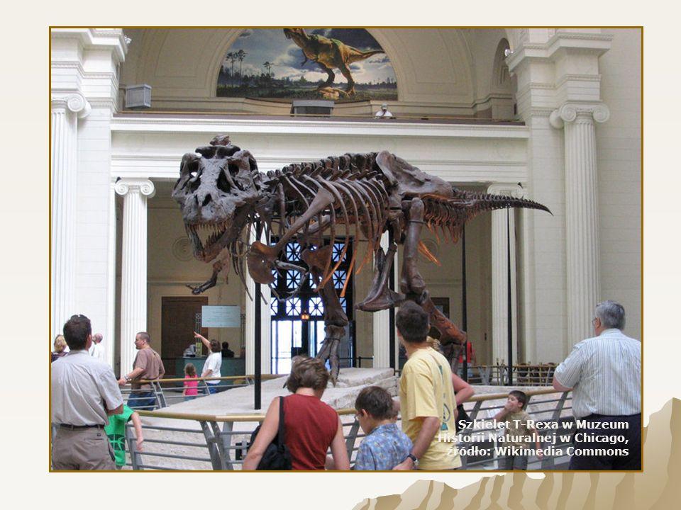Szkielet T-Rexa w Muzeum Historii Naturalnej w Chicago, źródło: Wikimedia Commons