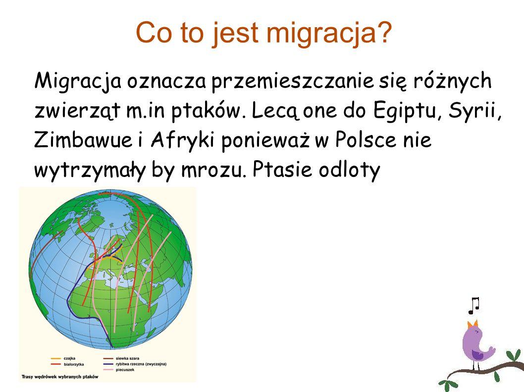 Co to jest migracja