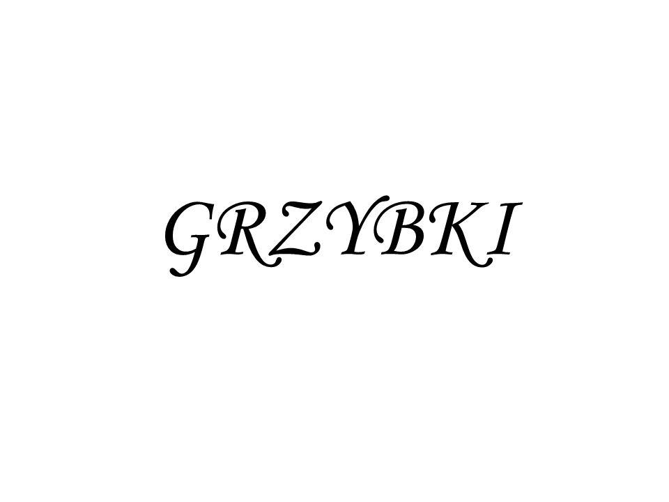 GRZYBKI