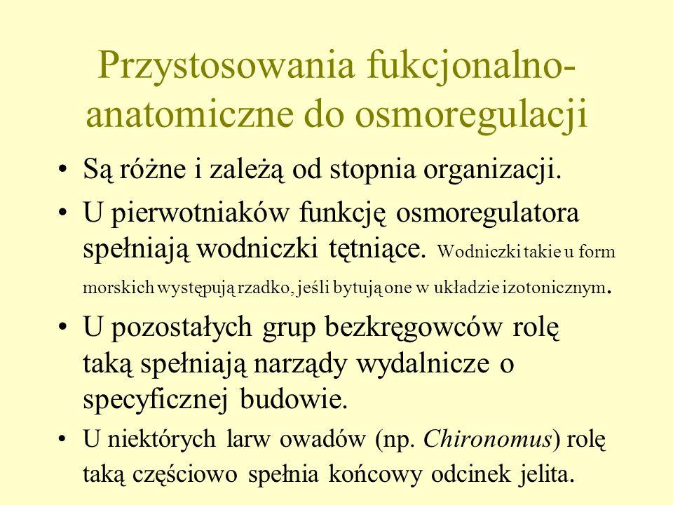 Przystosowania fukcjonalno-anatomiczne do osmoregulacji