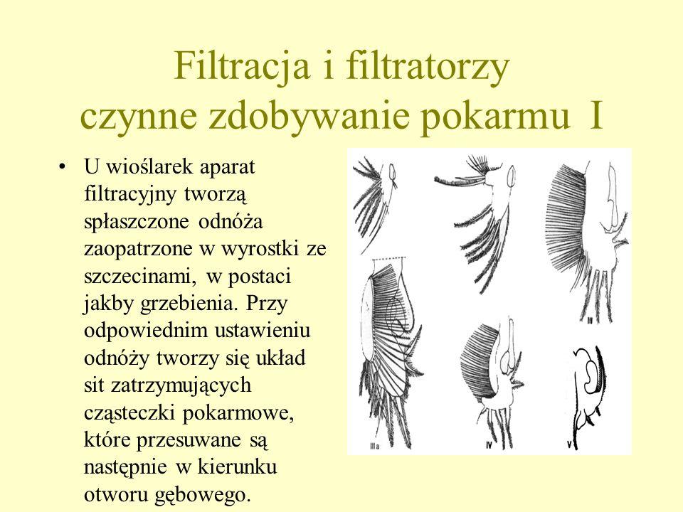 Filtracja i filtratorzy czynne zdobywanie pokarmu I