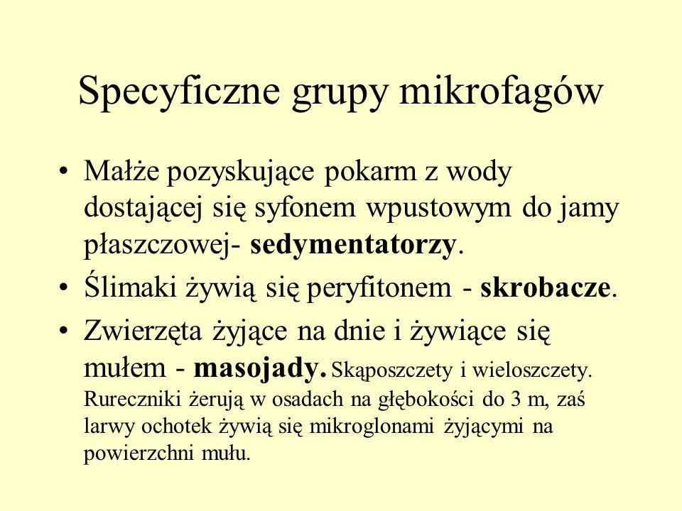 Specyficzne grupy mikrofagów