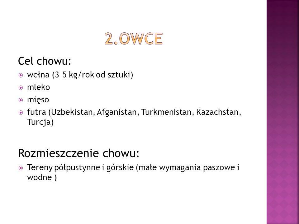 2.OWCE Rozmieszczenie chowu: Cel chowu: wełna (3-5 kg/rok od sztuki)