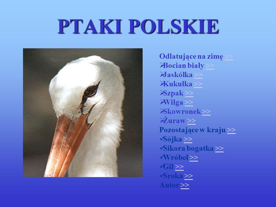 PTAKI POLSKIE Odlatujące na zimę >> Bocian biały >>