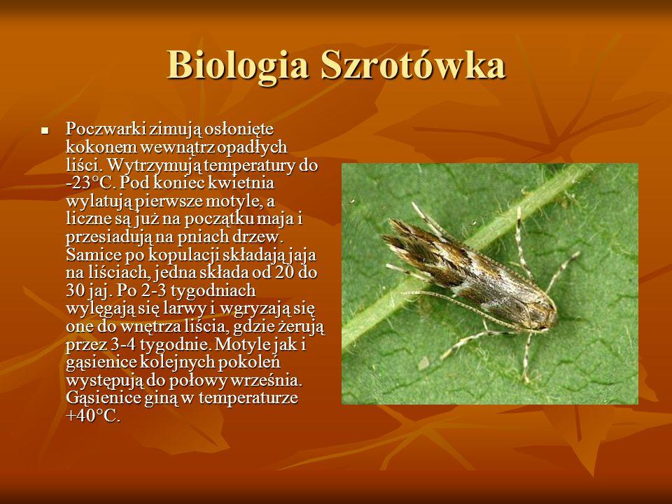 Biologia Szrotówka