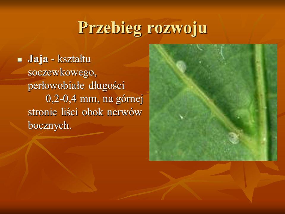 Przebieg rozwoju Jaja - kształtu soczewkowego, perłowobiałe długości 0,2-0,4 mm, na górnej stronie liści obok nerwów bocznych.