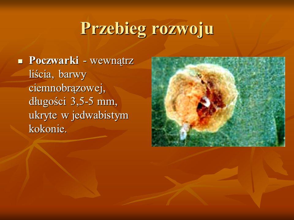 Przebieg rozwoju Poczwarki - wewnątrz liścia, barwy ciemnobrązowej, długości 3,5-5 mm, ukryte w jedwabistym kokonie.