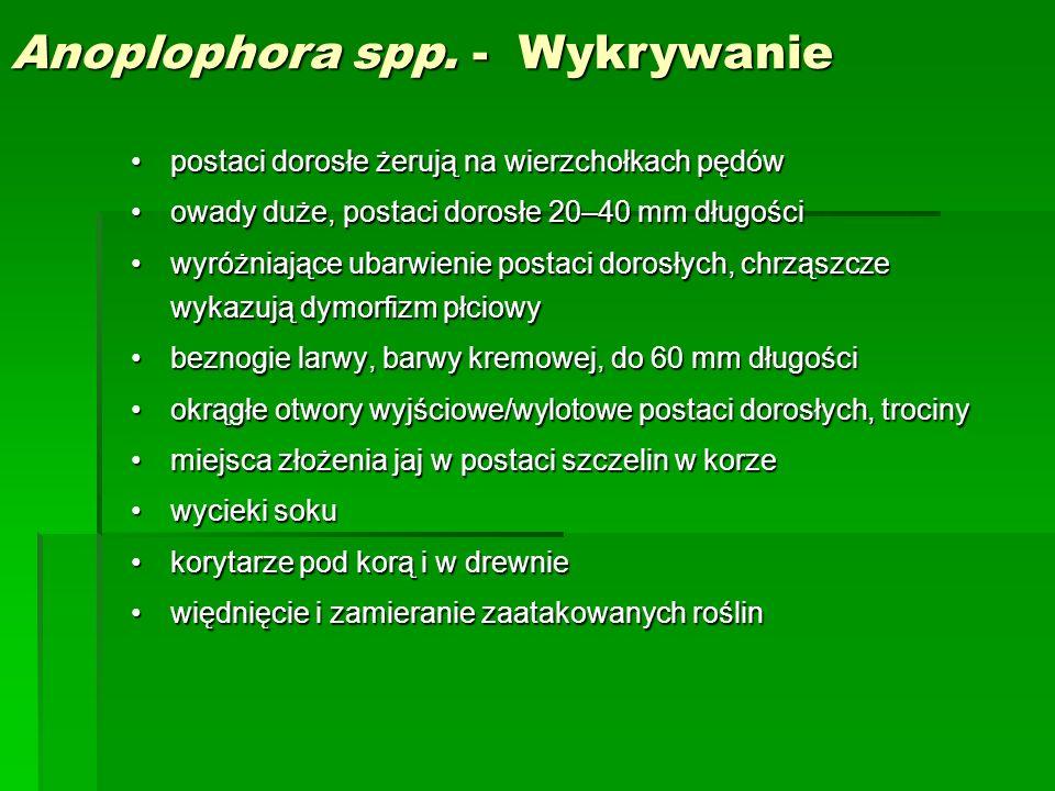 Anoplophora spp. - Wykrywanie