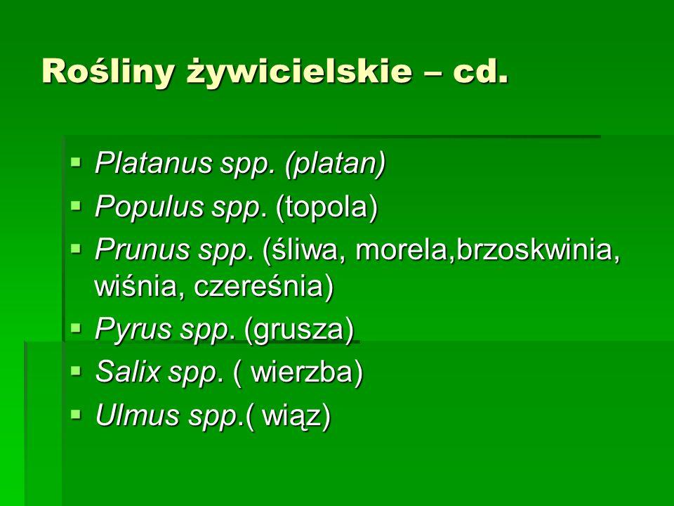 Rośliny żywicielskie – cd.