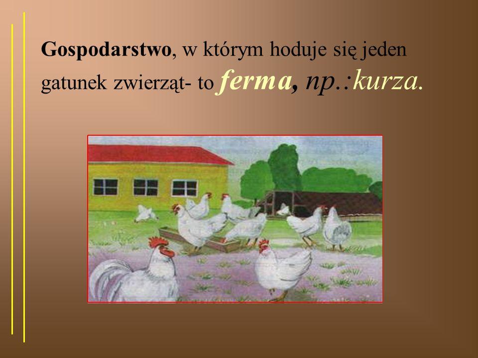 Gospodarstwo, w którym hoduje się jeden gatunek zwierząt- to ferma, np