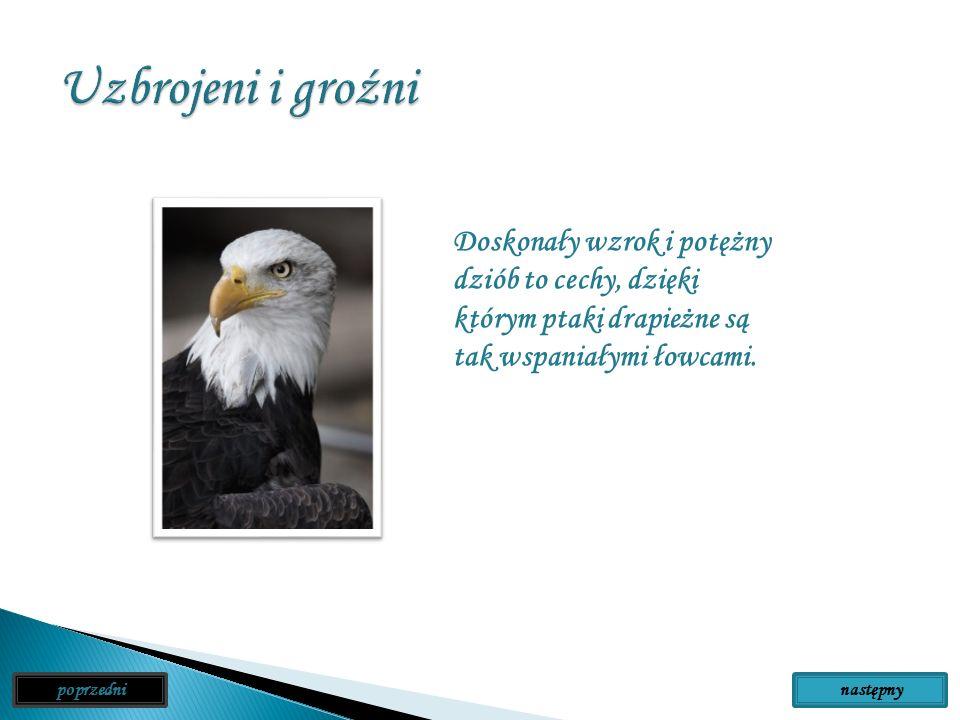 Uzbrojeni i groźni Doskonały wzrok i potężny dziób to cechy, dzięki którym ptaki drapieżne są tak wspaniałymi łowcami.