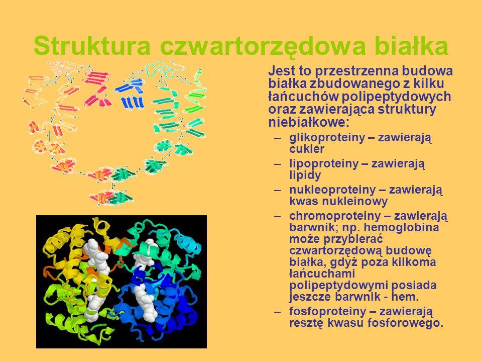 Struktura czwartorzędowa białka