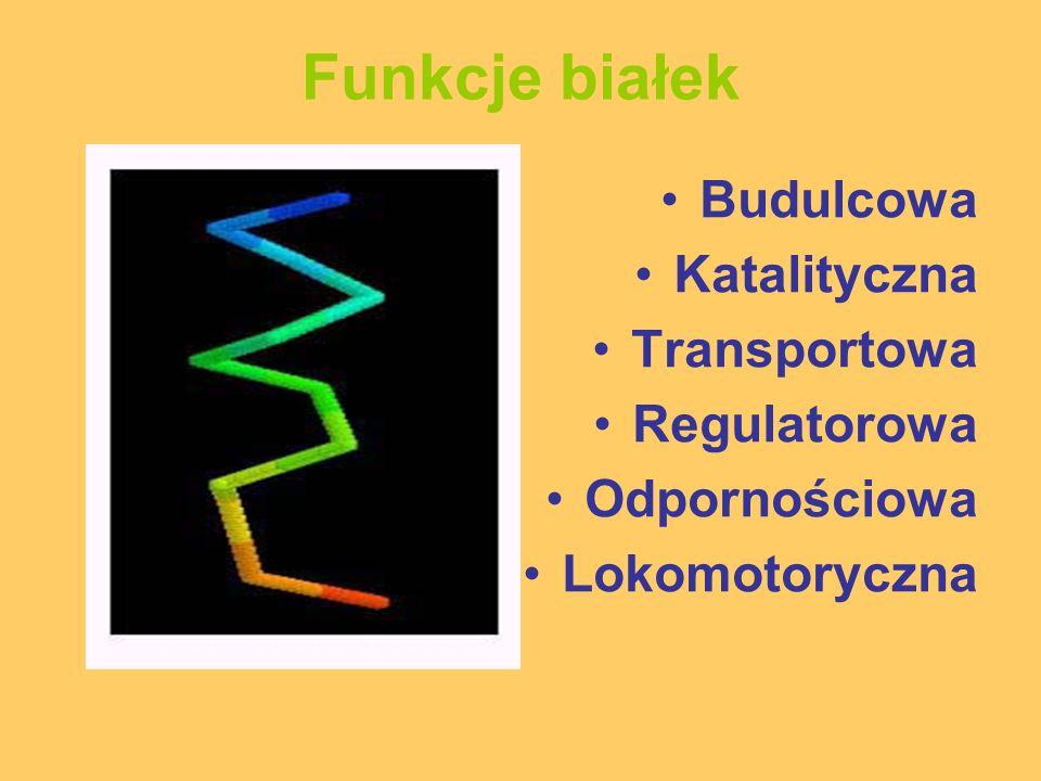 Funkcje białek Budulcowa Katalityczna Transportowa Regulatorowa