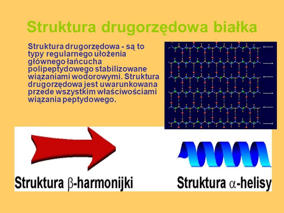 Struktura drugorzędowa białka