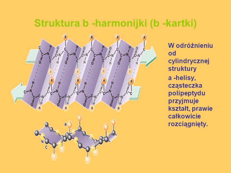Struktura b -harmonijki (b -kartki)