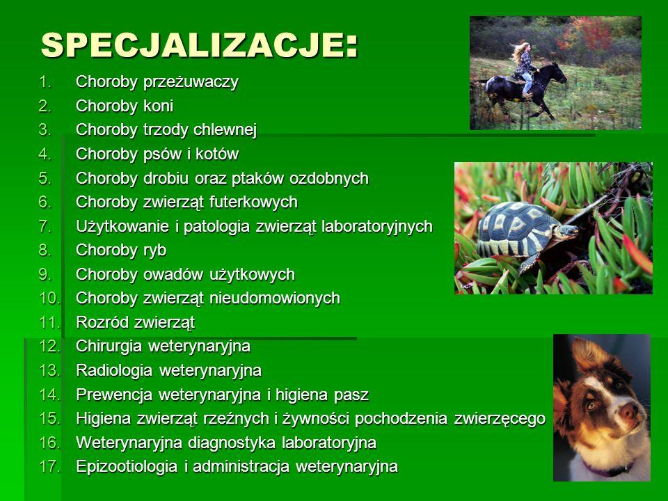 SPECJALIZACJE: Choroby przeżuwaczy Choroby koni
