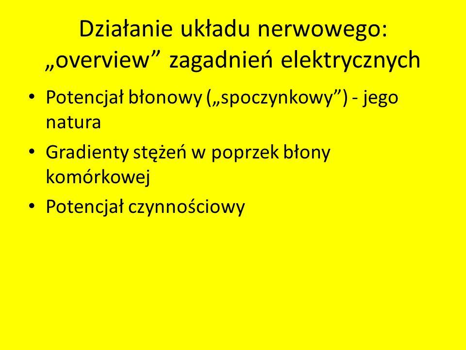 """Działanie układu nerwowego: """"overview zagadnień elektrycznych"""