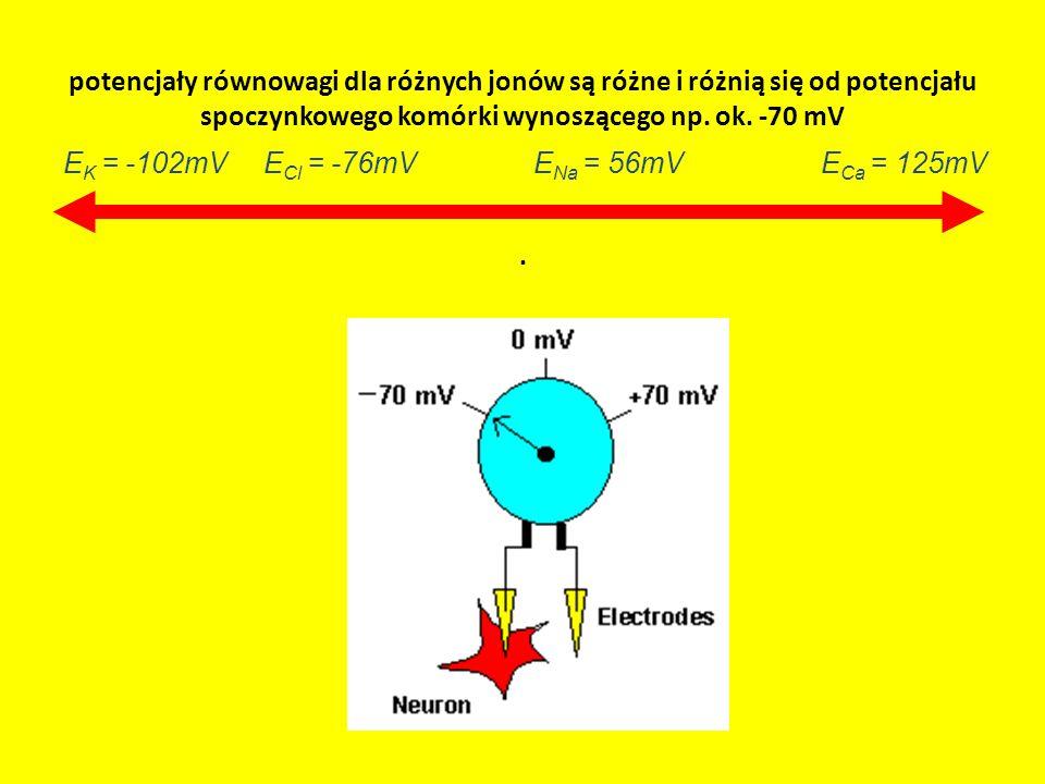 potencjały równowagi dla różnych jonów są różne i różnią się od potencjału spoczynkowego komórki wynoszącego np. ok. -70 mV .