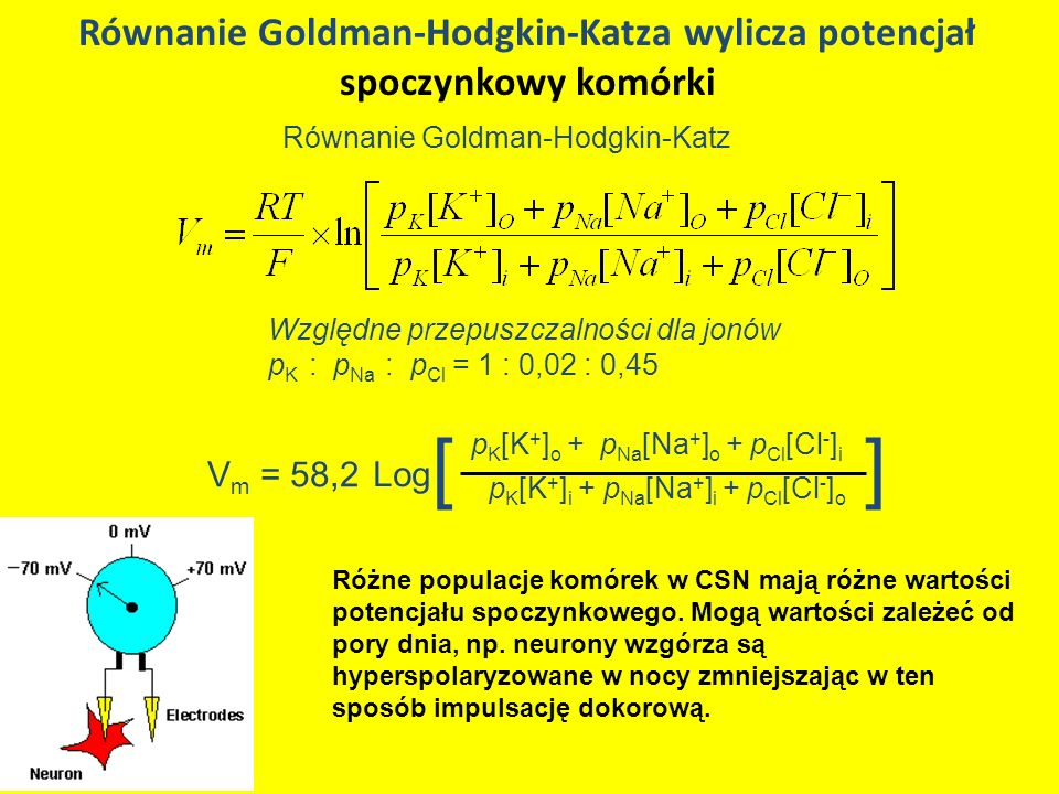 Równanie Goldman-Hodgkin-Katza wylicza potencjał spoczynkowy komórki