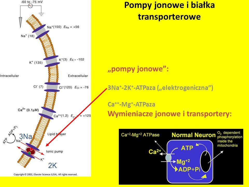 Pompy jonowe i białka transporterowe
