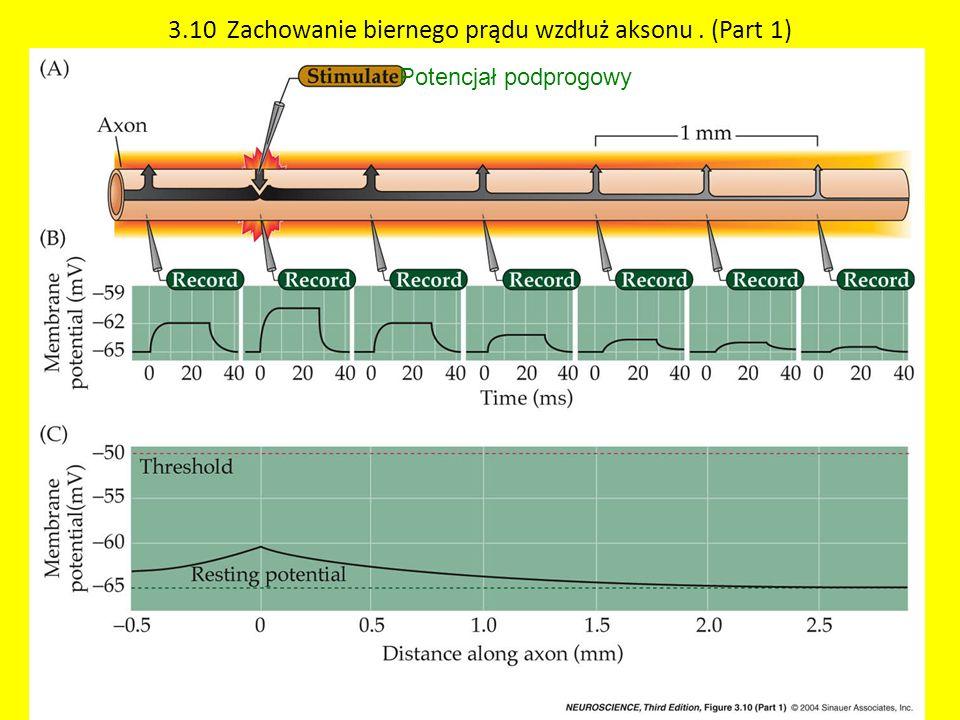 3.10 Zachowanie biernego prądu wzdłuż aksonu . (Part 1)