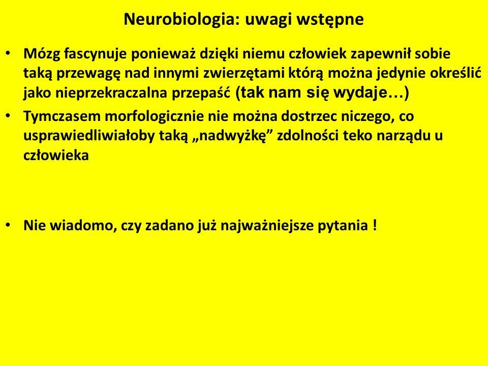 Neurobiologia: uwagi wstępne
