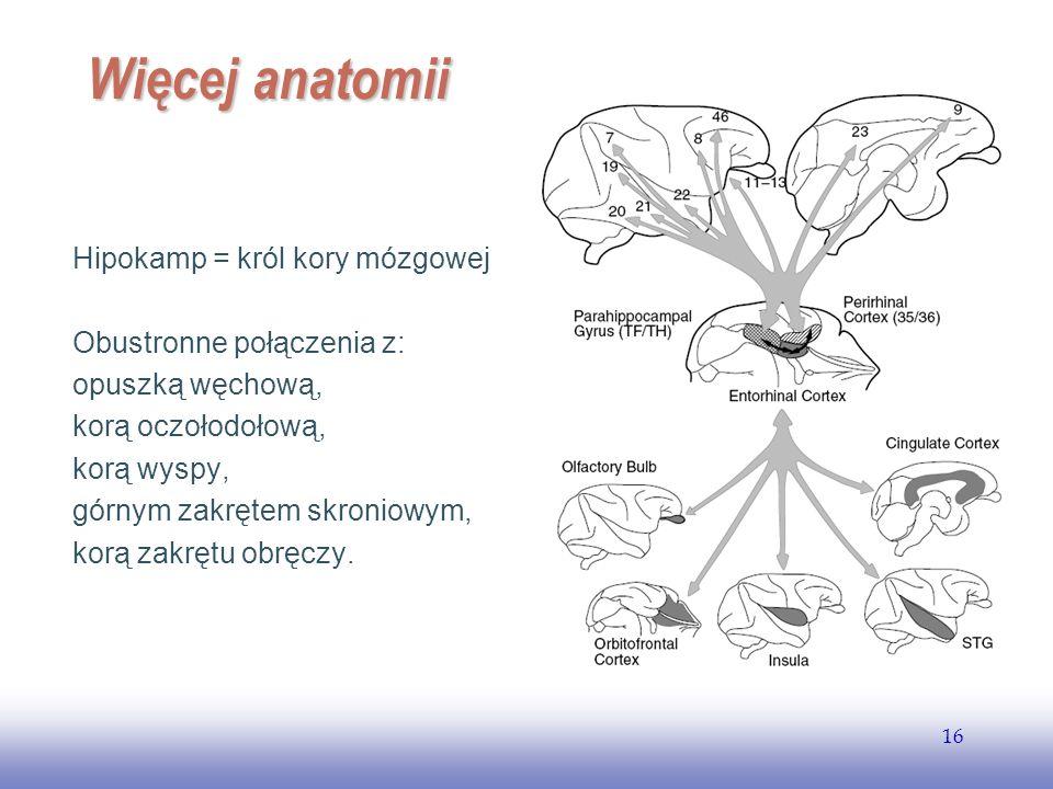 Więcej anatomii Hipokamp = król kory mózgowej Obustronne połączenia z: