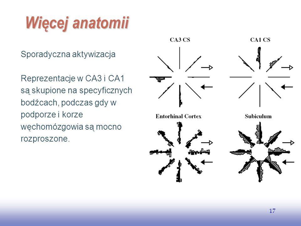 Więcej anatomii Sporadyczna aktywizacja Reprezentacje w CA3 i CA1