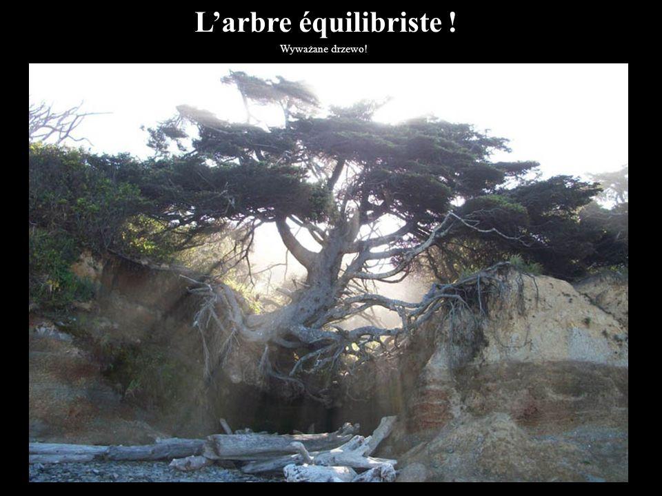 L'arbre équilibriste ! Wyważane drzewo! 3