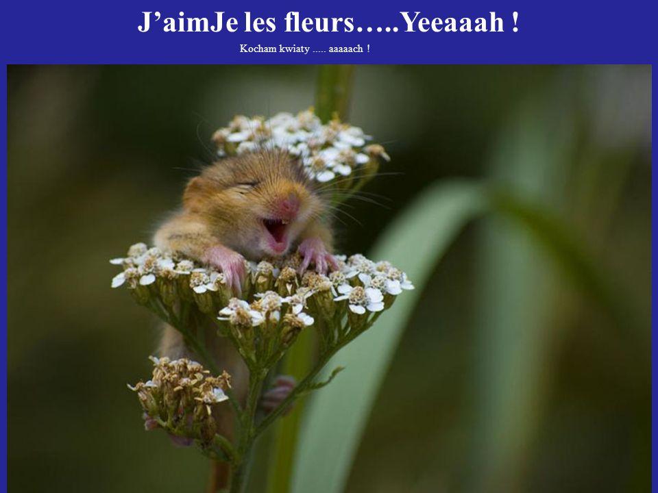 J'aimJe les fleurs…..Yeeaaah !