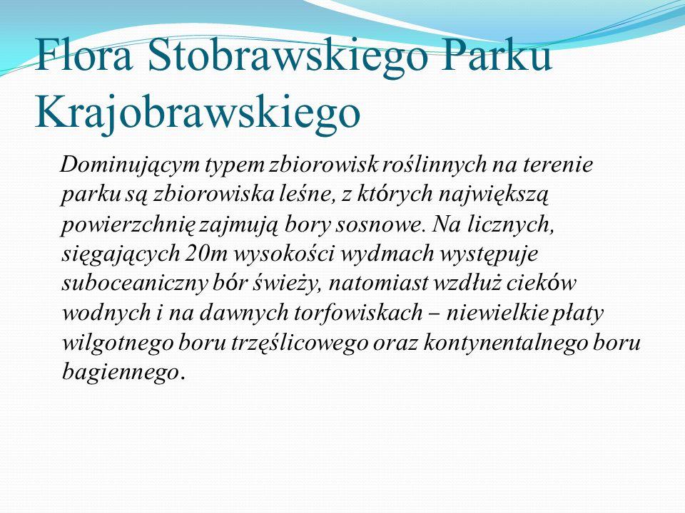Flora Stobrawskiego Parku Krajobrawskiego