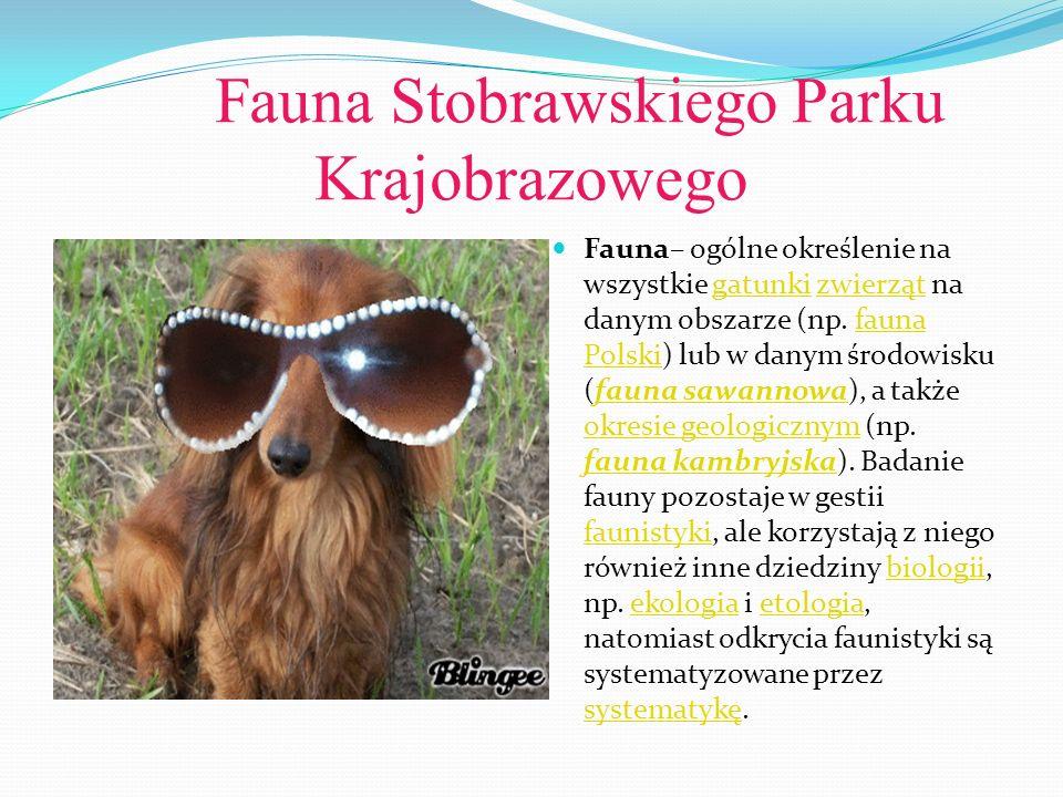 Fauna Stobrawskiego Parku Krajobrazowego