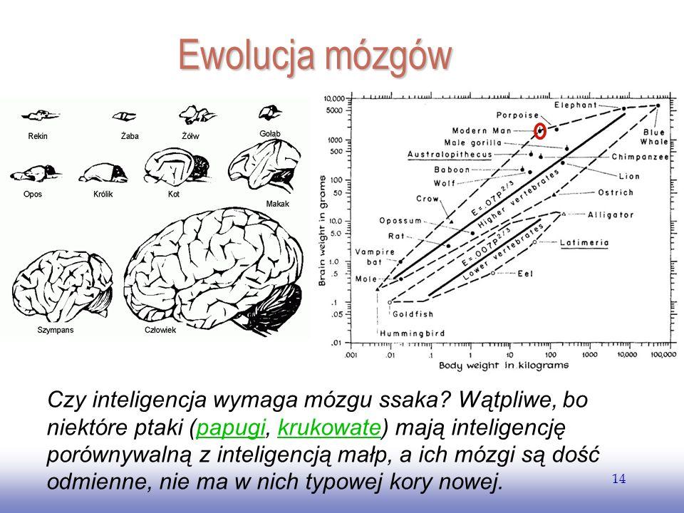 EE141 Ewolucja mózgów.