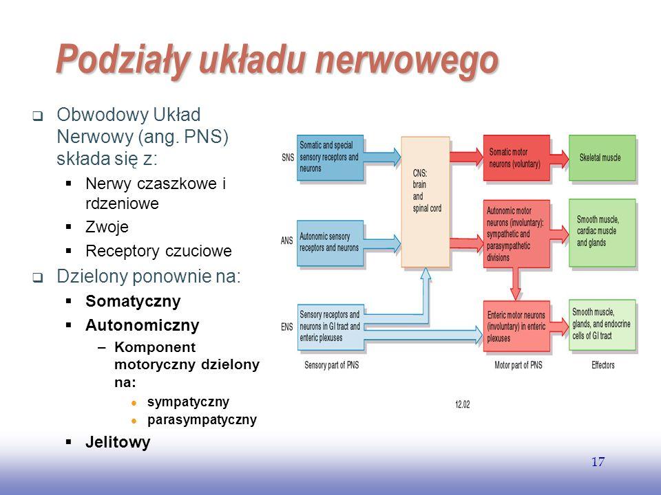 Podziały układu nerwowego