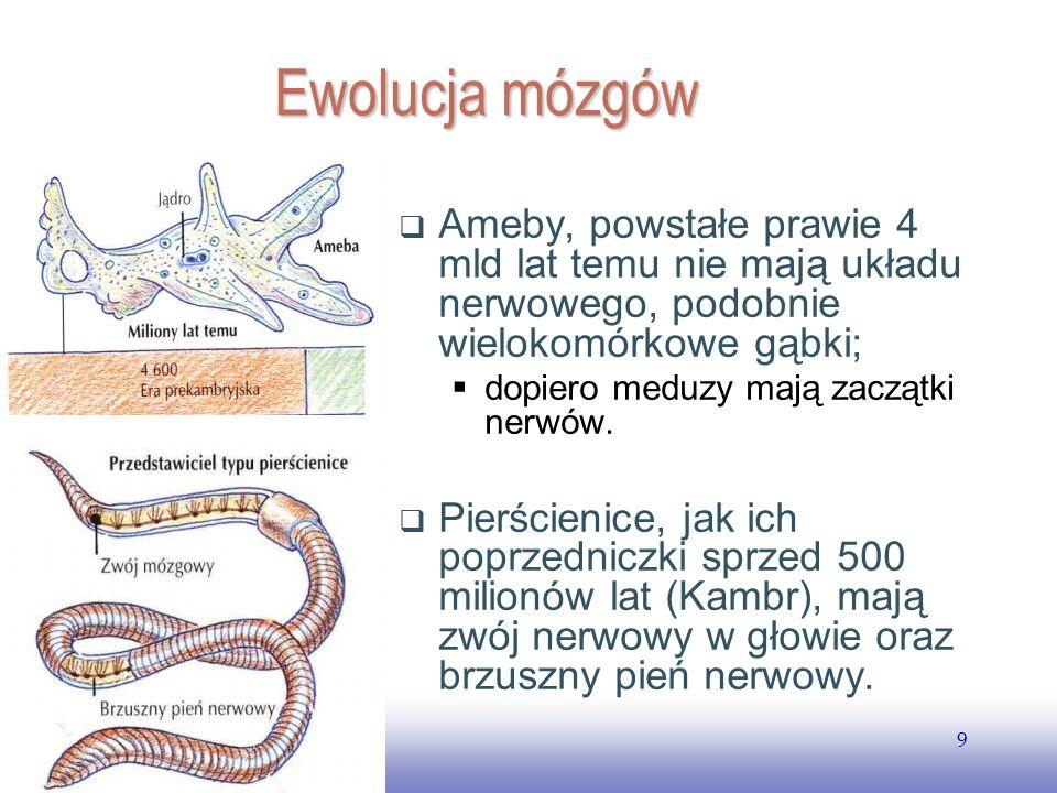 EE141 Ewolucja mózgów. Ameby, powstałe prawie 4 mld lat temu nie mają układu nerwowego, podobnie wielokomórkowe gąbki;