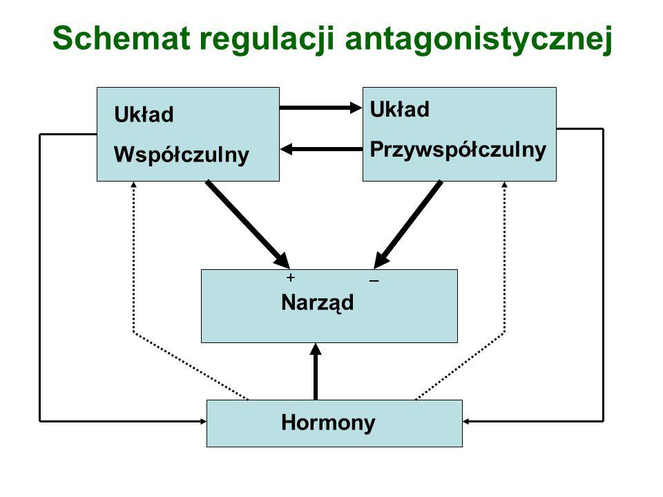 Schemat regulacji antagonistycznej